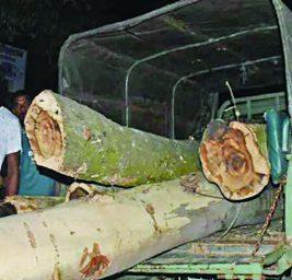 দিনাজপুরে বন বিভাগের গাড়িতেই কাঠ পাচার