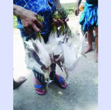 হবিগঞ্জে অবাধে চলছে পাখি শিকার