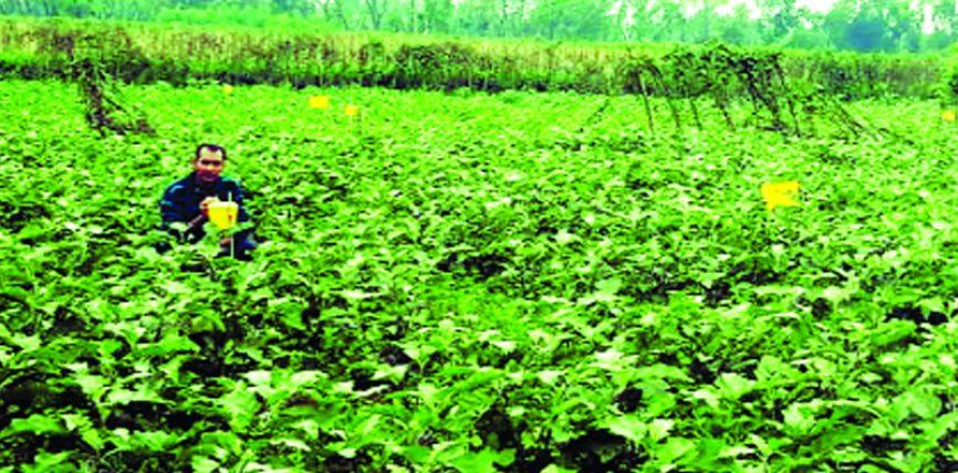 ফেরোমন ফাঁদে আগ্রহী সীতাকুণ্ডের কৃষকেরা, ৪০০ ক্ষেতে বিষমুক্ত সবজি চাষ