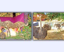 চট্টগ্রাম চিড়িয়াখানায় নতুন অতিথি
