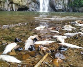 মাধবকুন্ড জলপ্রপাতে বিষক্রিয়ায় মাছসহ জলজ প্রাণী মরে যাচ্ছে