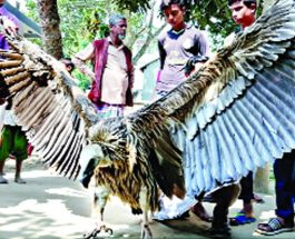কিশোরগঞ্জে বিলুপ্তপ্রায় প্রজাতির বুনো শকুন উদ্ধার