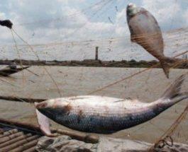 নিষেধাজ্ঞা অমান্য করে মাছ ধরা হয়