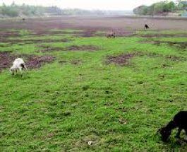 ভদ্রা নদী এখন বালুচর, ৪৬ কোটি টাকার অপচয়