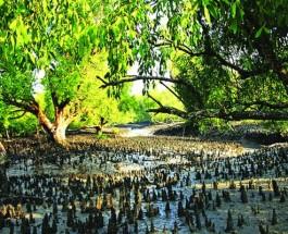 ভারতীয় পরিবেশ আদালতের নির্দেশ সুন্দরবনকে 'অসুন্দর' করা যাবে না